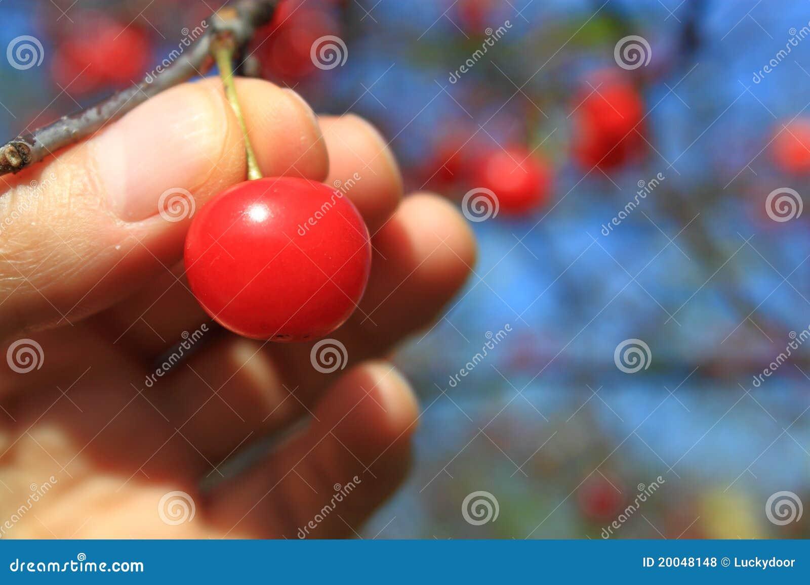Cherry äga din hacka