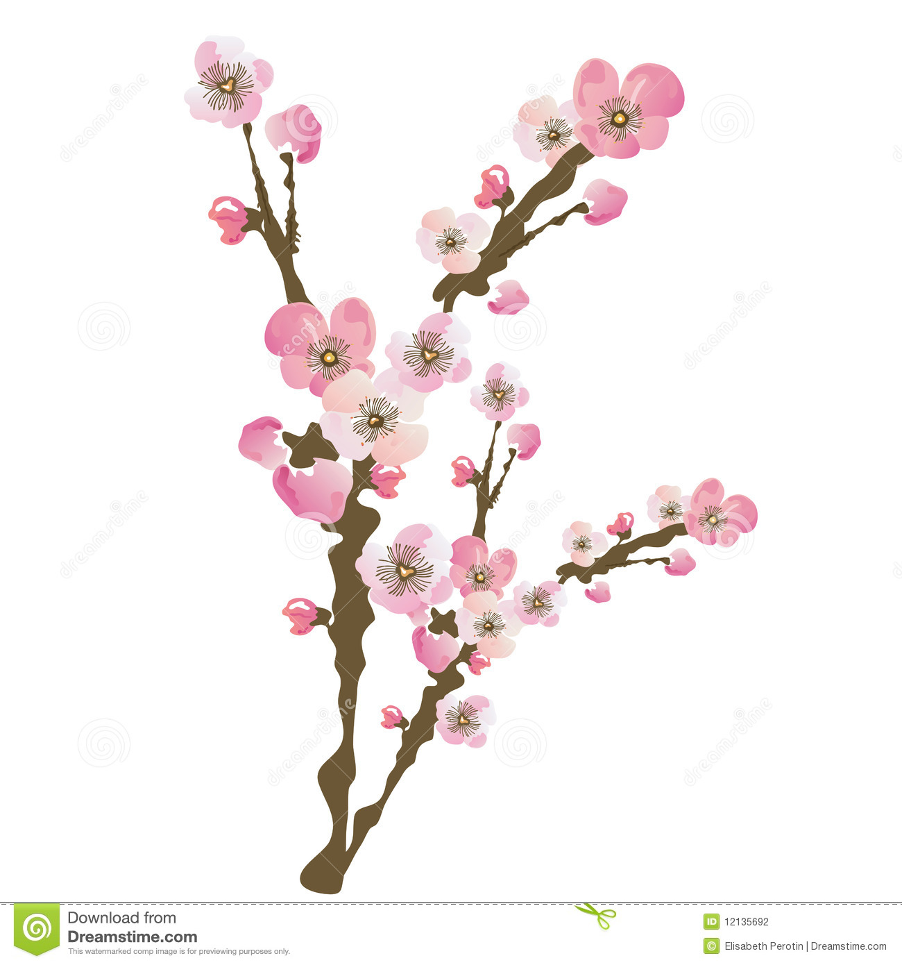 Cherry Blossom Stock Photography Image 12135692