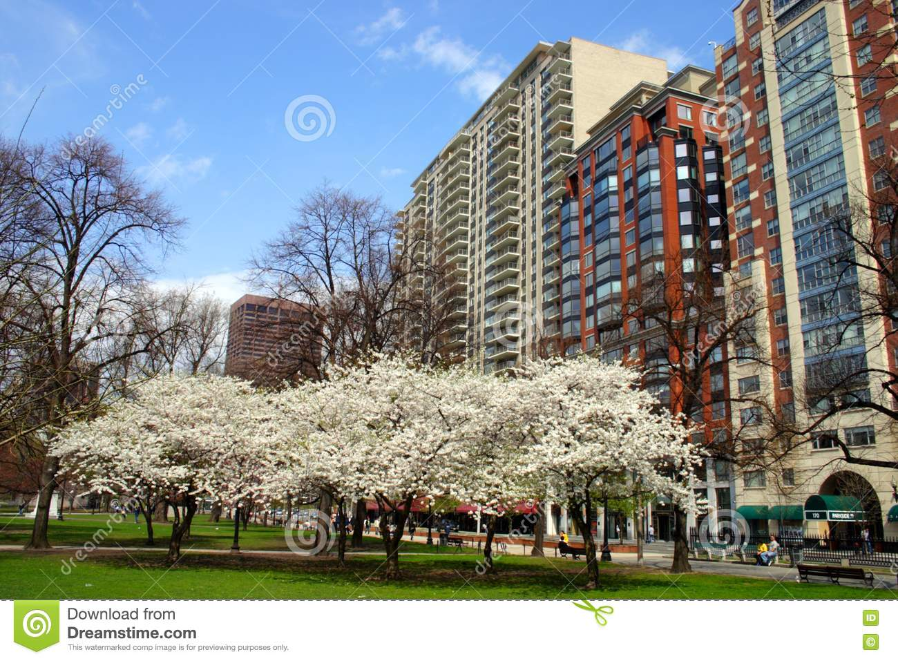 Red Plum Blossoming In The Sunny Day On A Winter Day Stock Photography 85416230