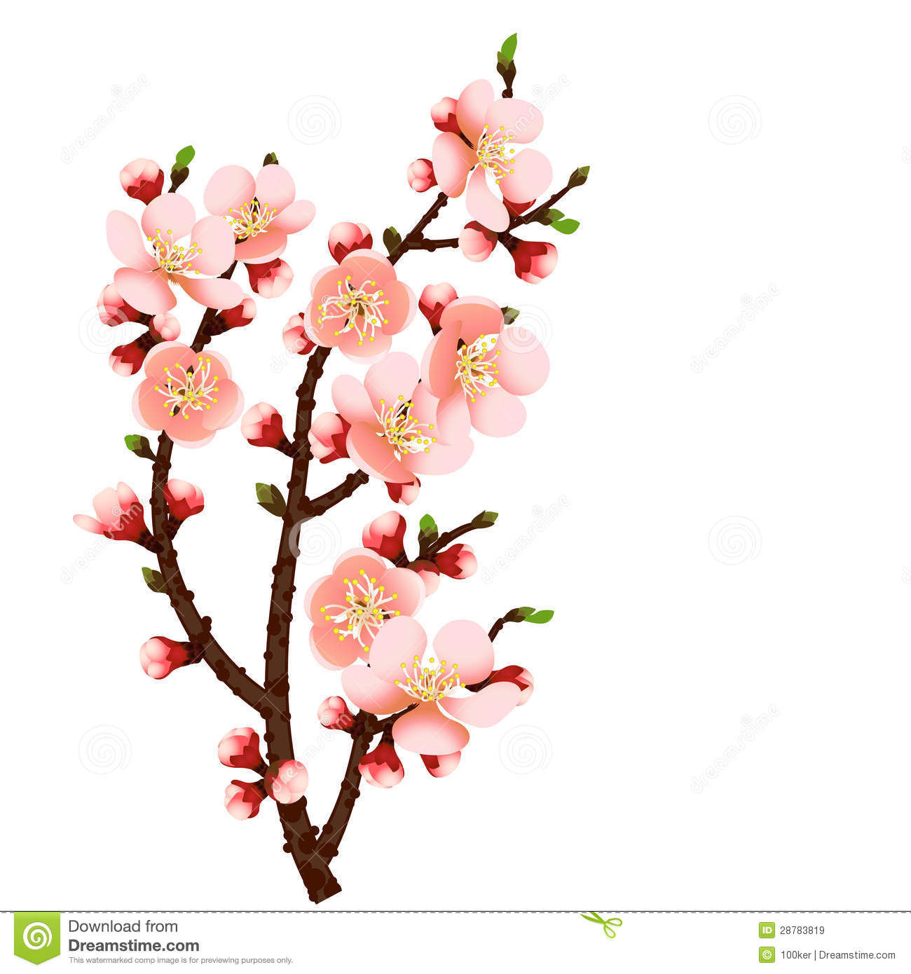 Cherry Blossom Branch Abstract Background Royalty Free