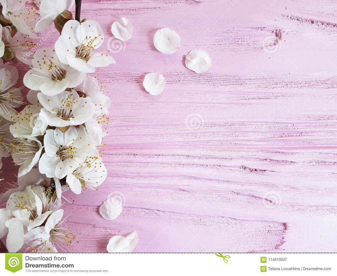 Cherry blossom branch fresh vintage spring on a pink wooden background