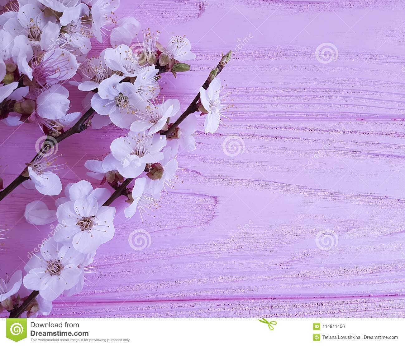 Cherry blossom branch on a pink wooden background