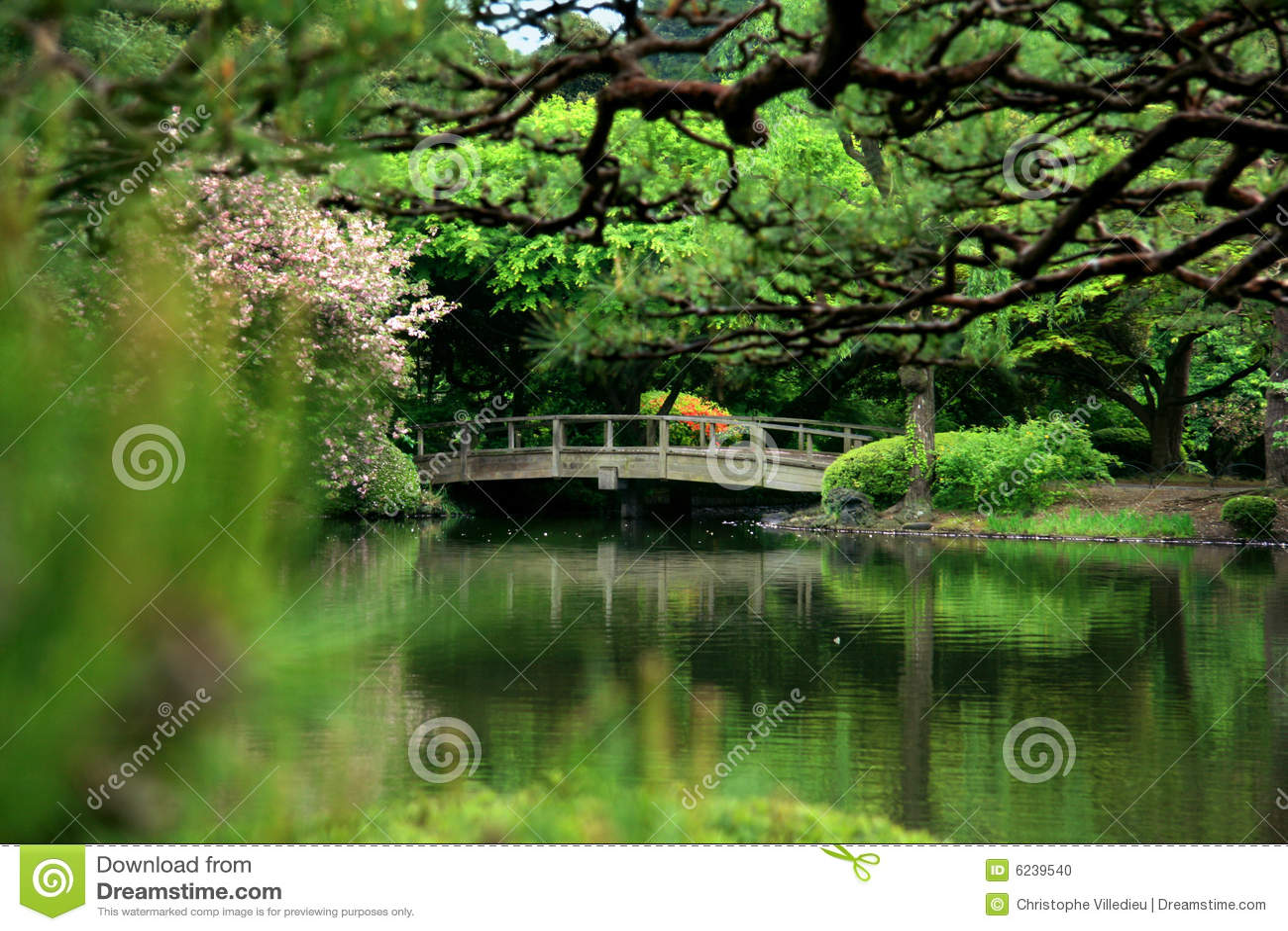 Cherry Blossom And Bridge In Calm Zen Garden Tokyo