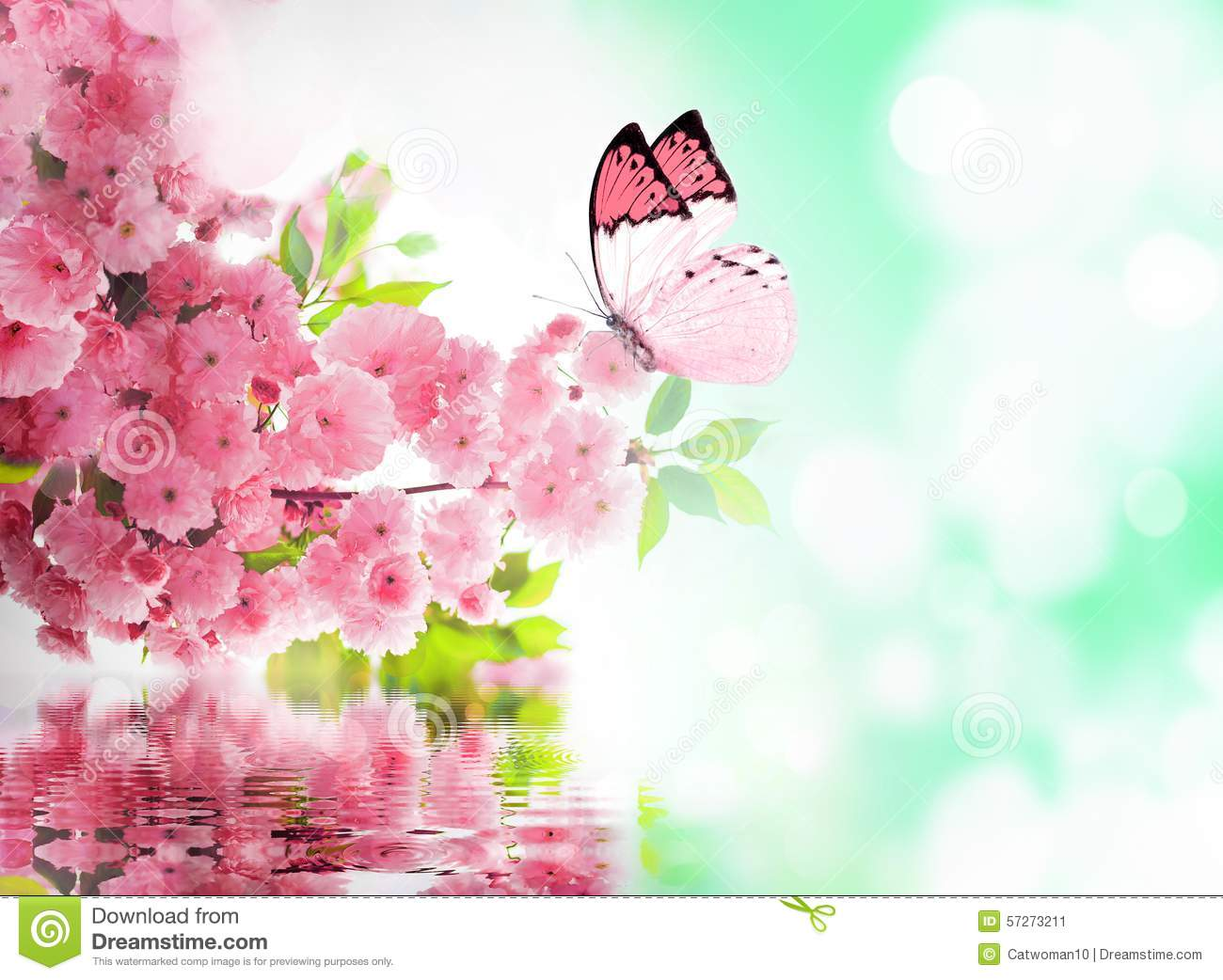 577af7d7c Cherry Blossom And Butterfly Stock Image - Image of europe, japanese ...