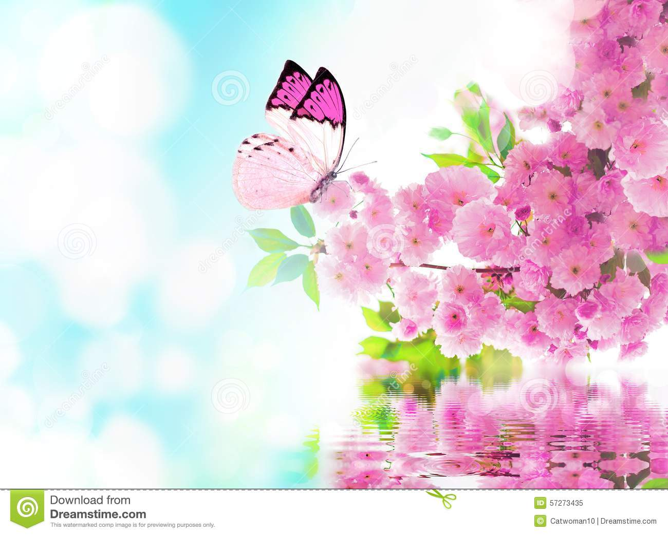 3fd5d72ff Cherry Blossom And Butterfly Stock Image - Image of flora, floral ...