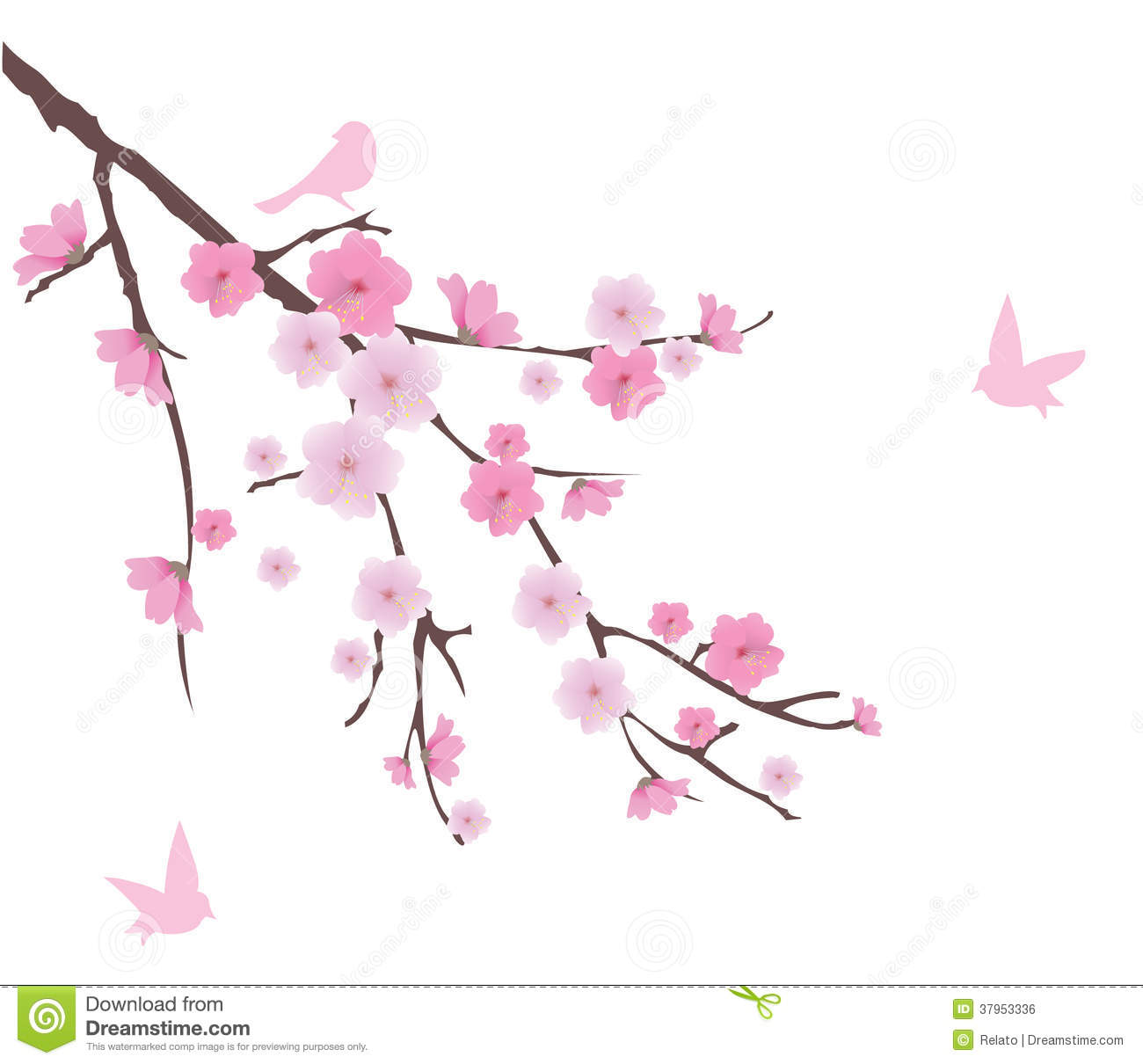 Cherry Blossom Royalty Free Stock Image - Image: 37953336