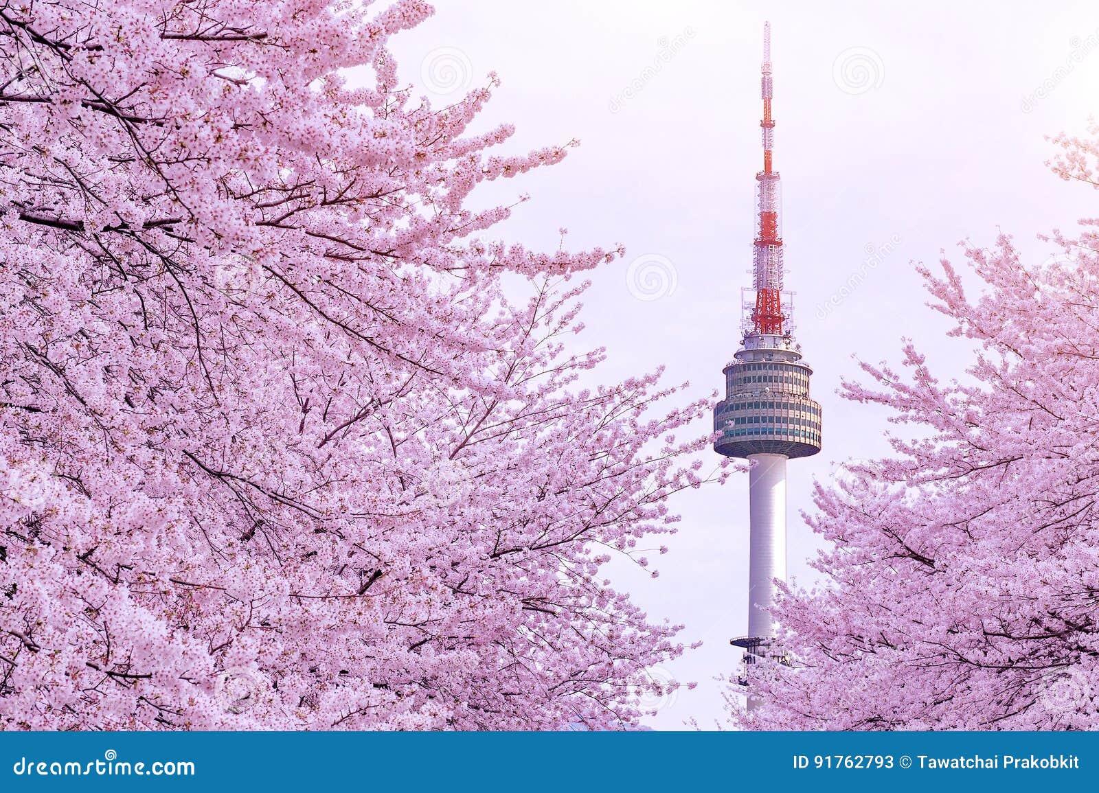 Cherry Blossom med det seoul tornet