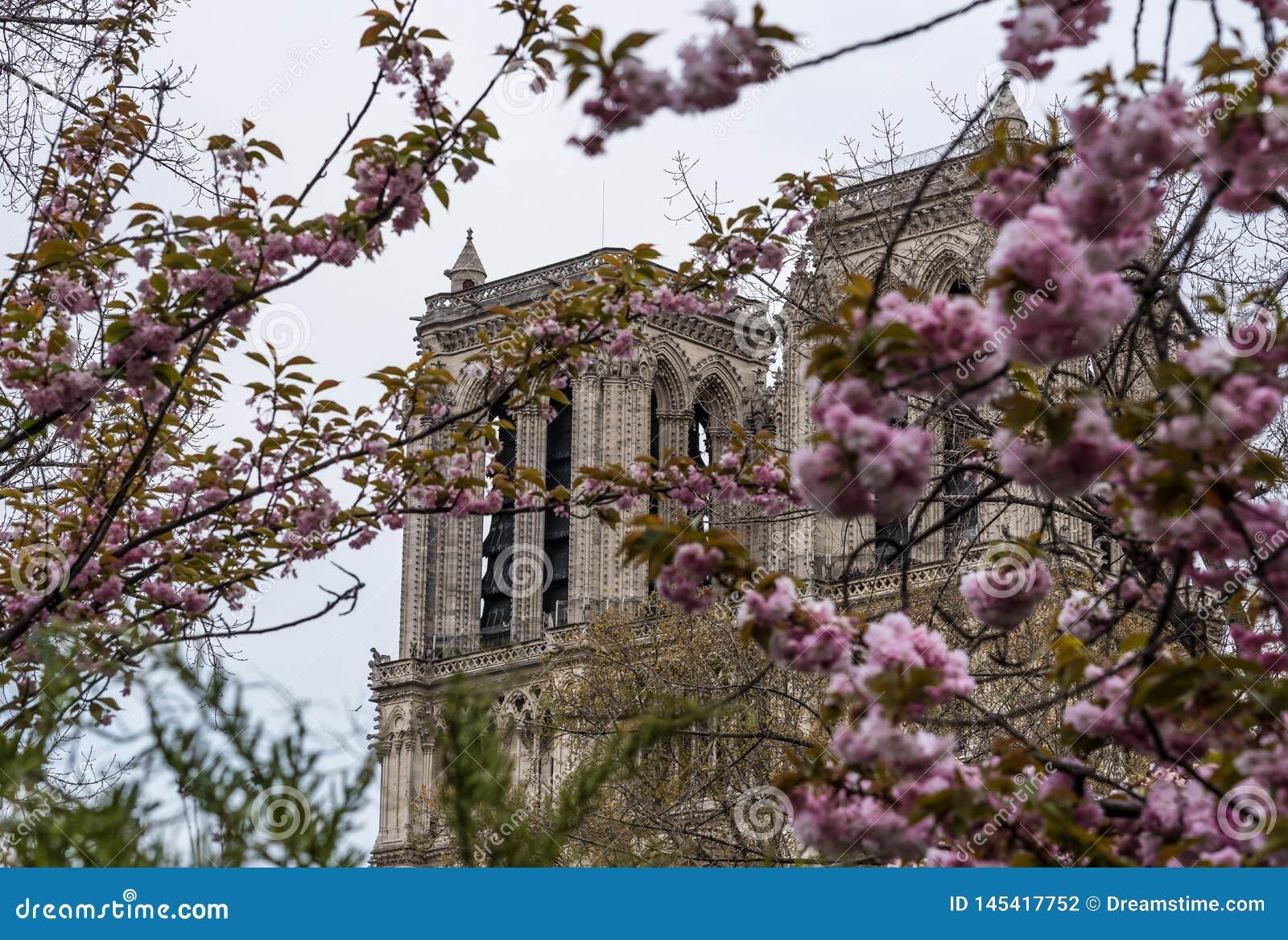 Notre-Dame de Paris , Paris