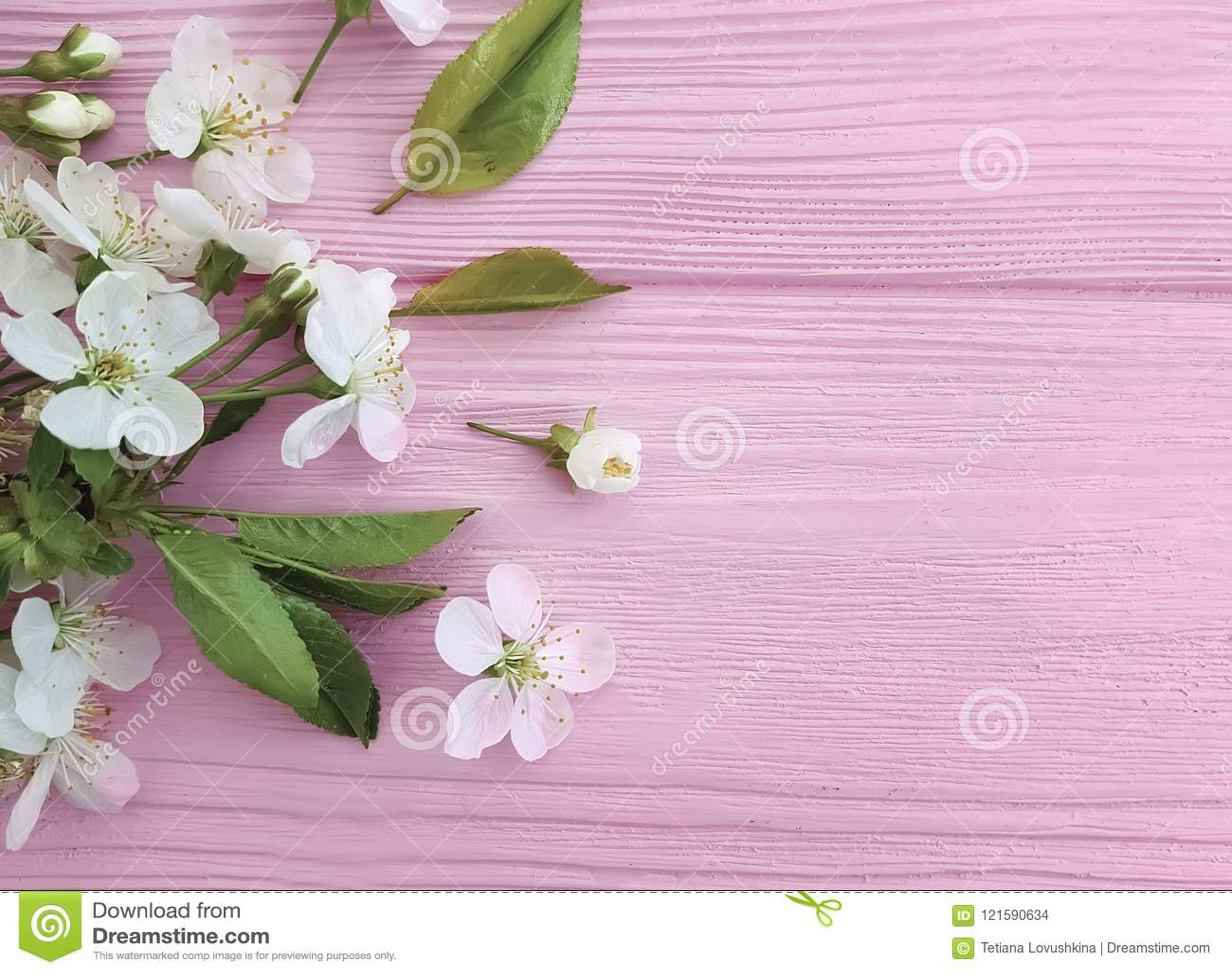 Cherry blossom on pink wooden decoration color border retro design pastel frame background