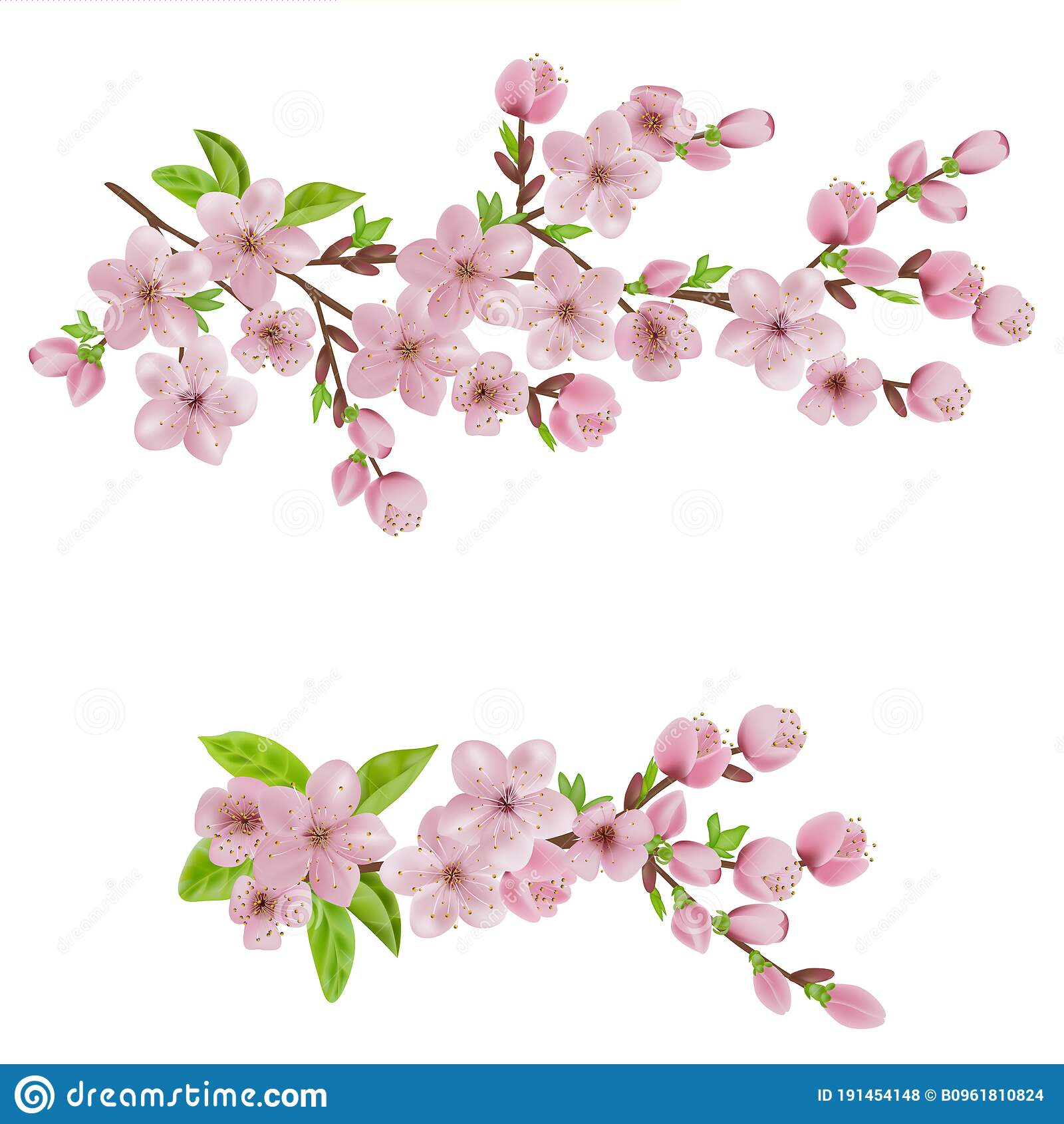Cherry Blossom Sakura Branch With Pink Flowers For Invitation Sales Packaging Cosmetics Perfume Stock Photo Image Of Background Nature 191454148