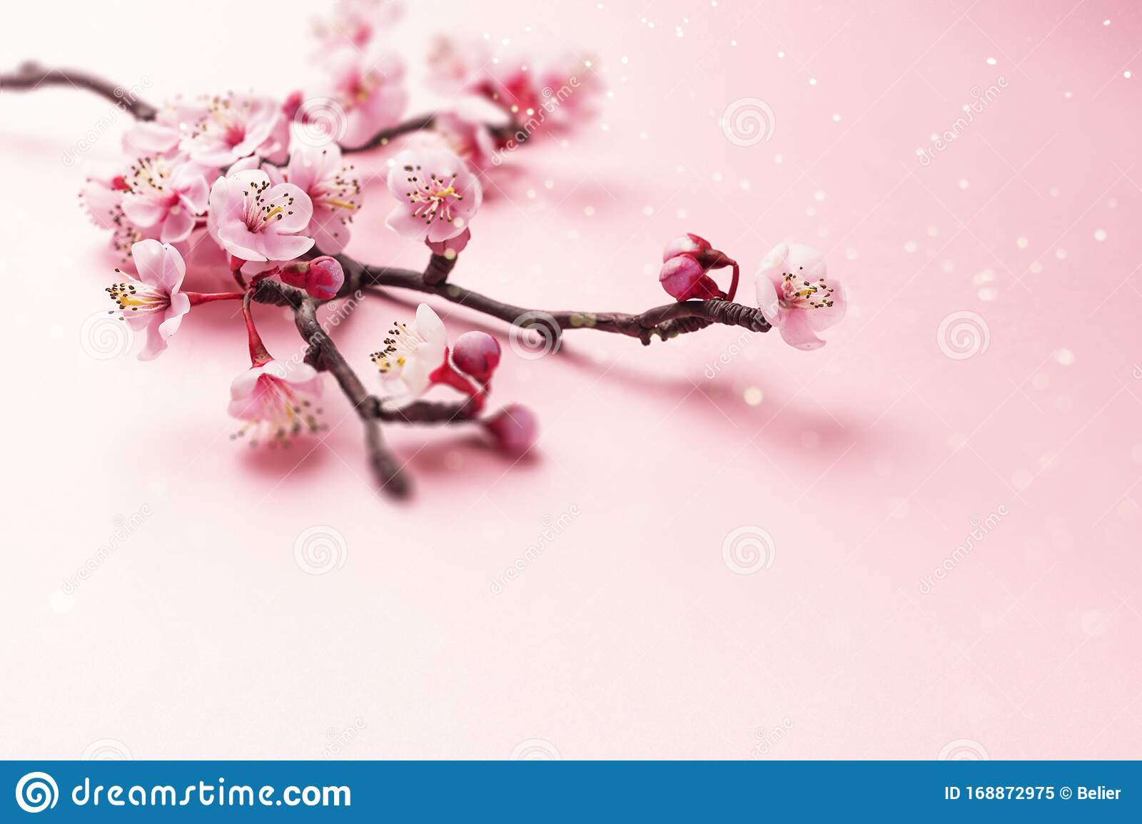 Sakura Branch On Pink Stock Image Image Of Essentials 168872975