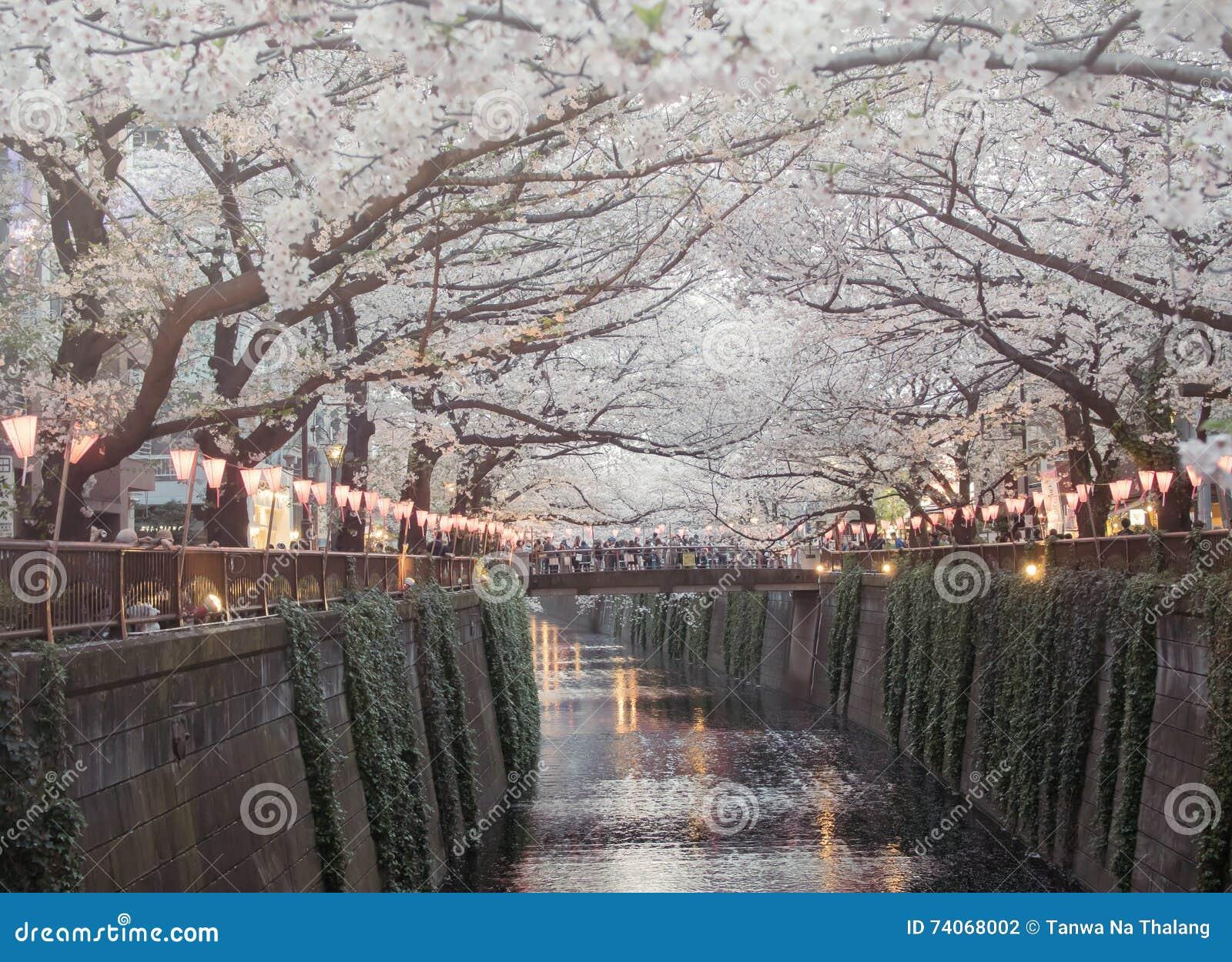 Landscape Of Cherry Blossom Sakura At Nakameguro River In Tokyo Japan Vintage Tone Color