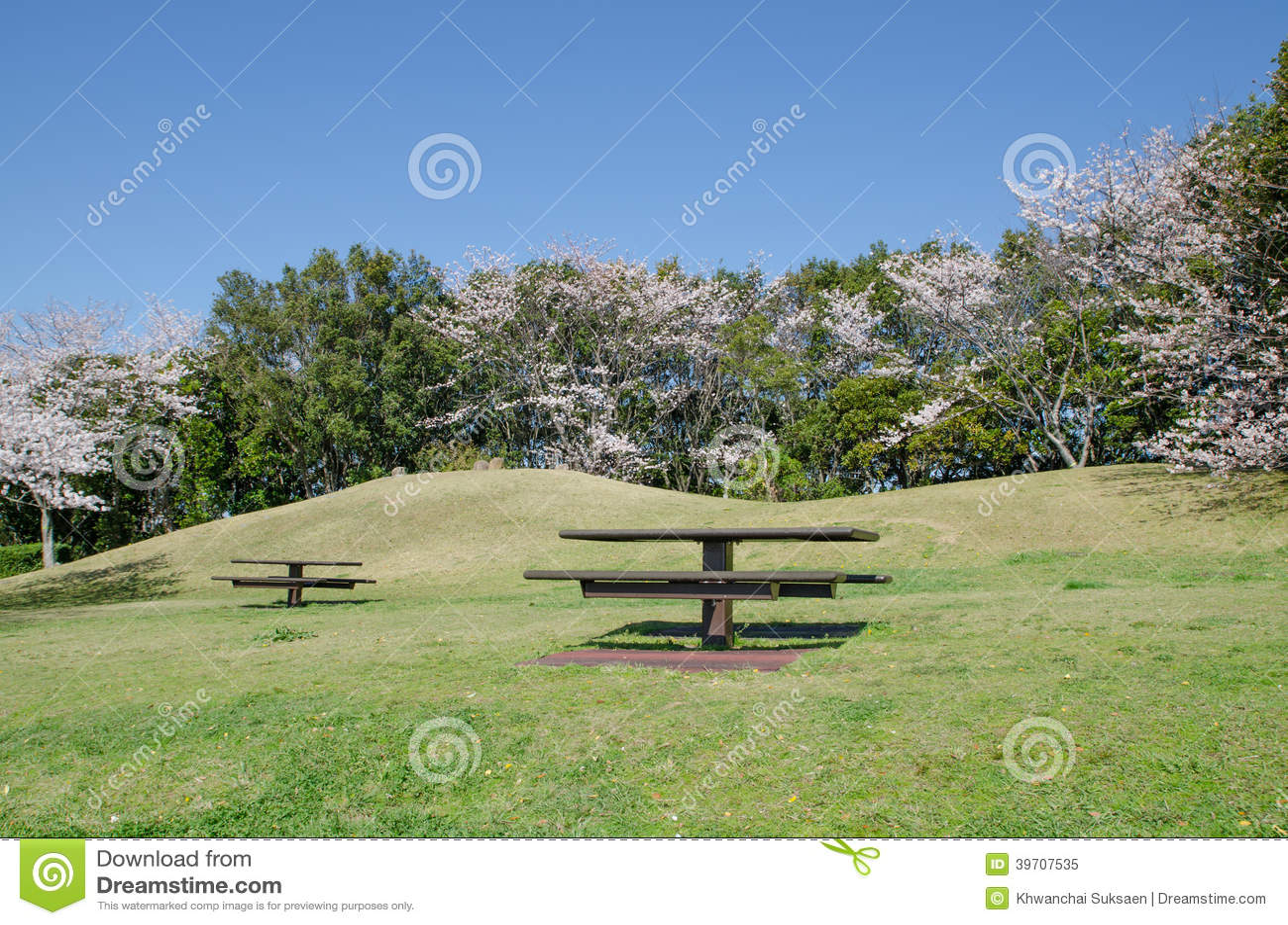 park spring blossom - photo #34