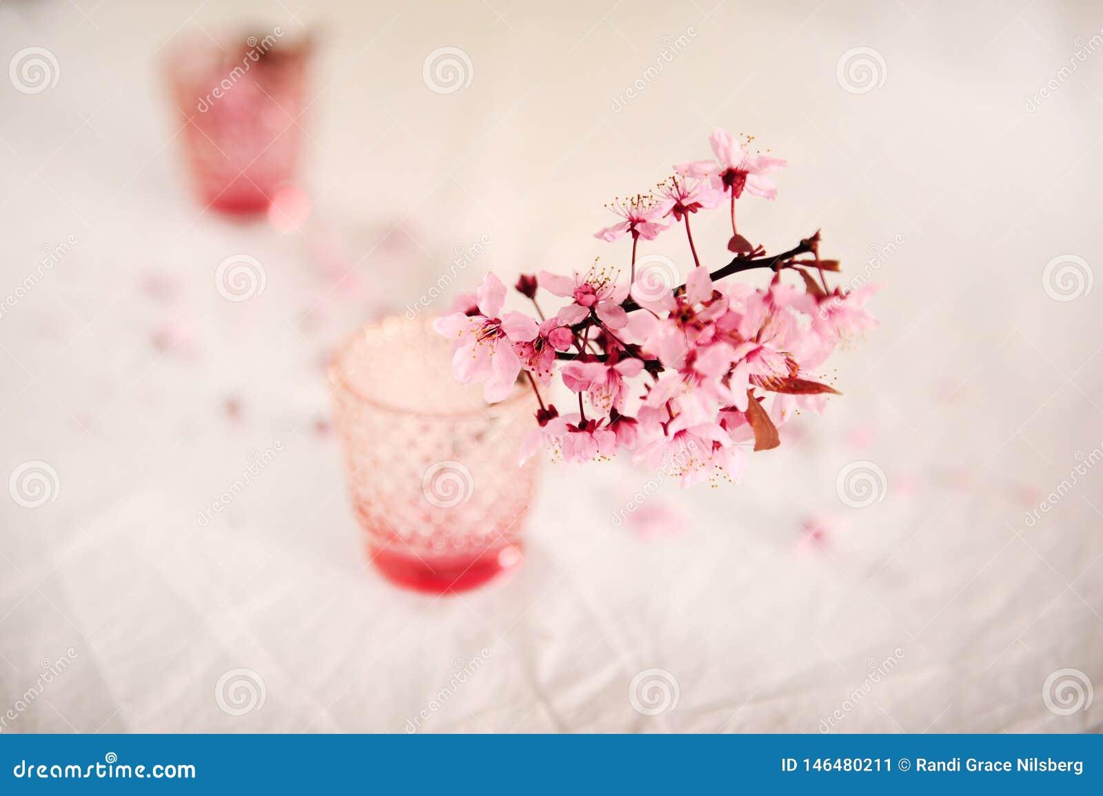 Cherry Blossoms im Rosa