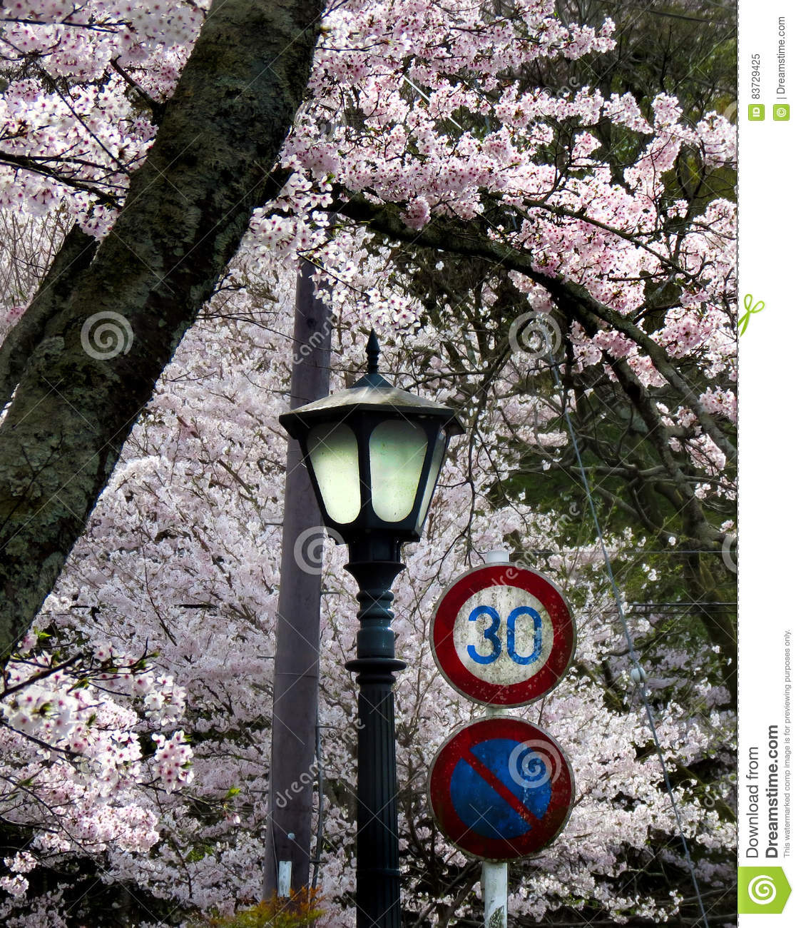 Cherry blossoms with lamppost and traffic signs