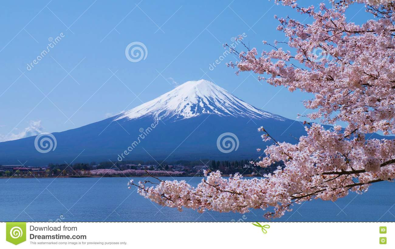 Cherry-blossoms and Mount Fuji which are viewed from Lake Kawaguchiko in Yamanashi, Japan