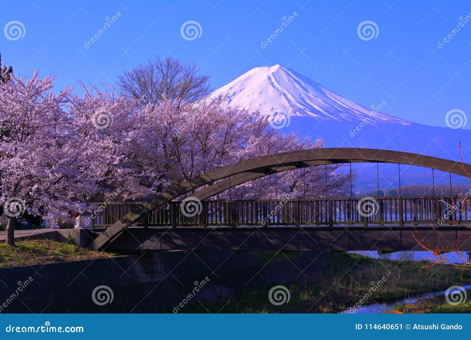 Cherry blossoms and Mt. Fuji from the northern coast of Lake Kawaguchi Japan