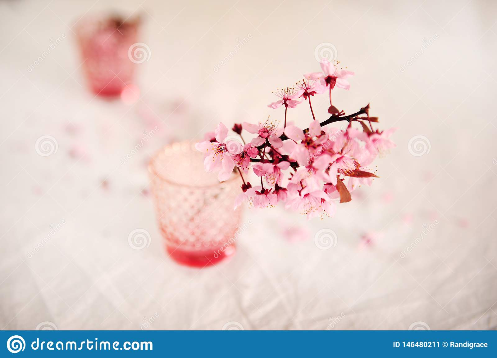 Cherry Blossoms nel rosa