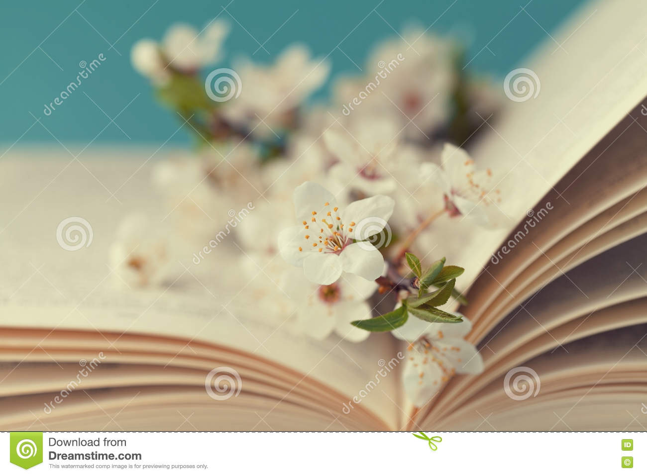 cherry blossoms and old book on turquoise background cherry blossom clip art black/white cherry blossoms clip art black and white