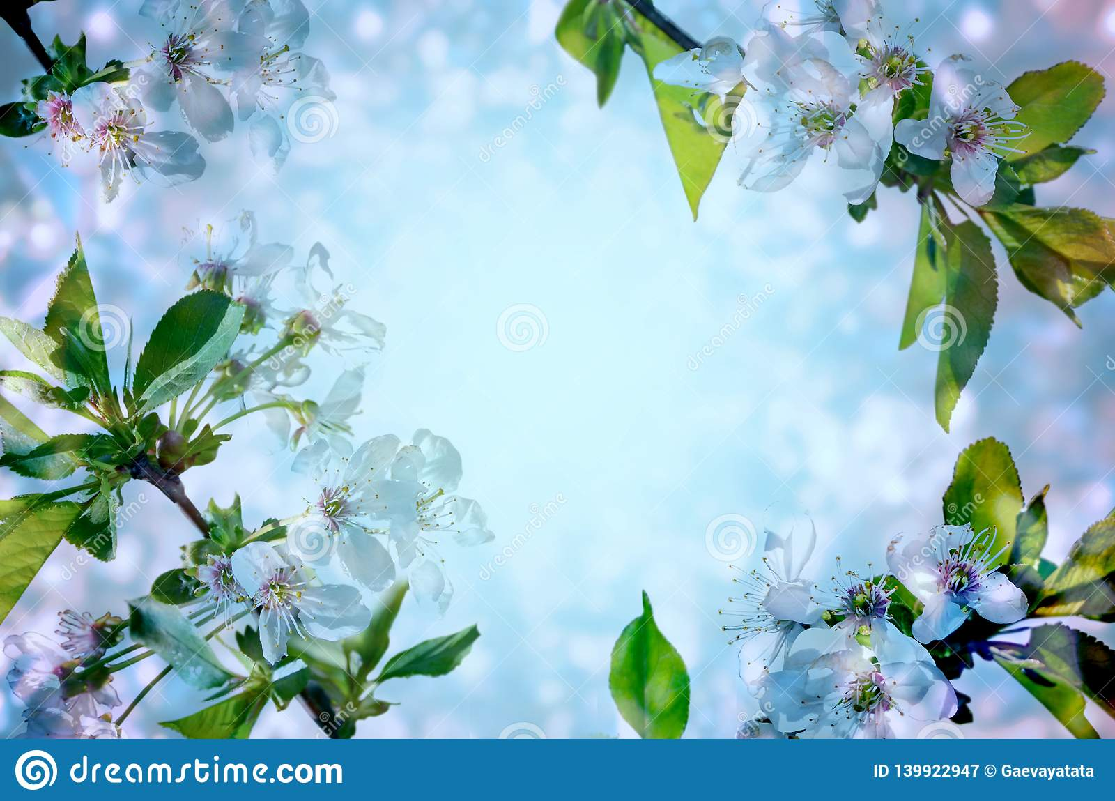 Cherry blossoms over blue background