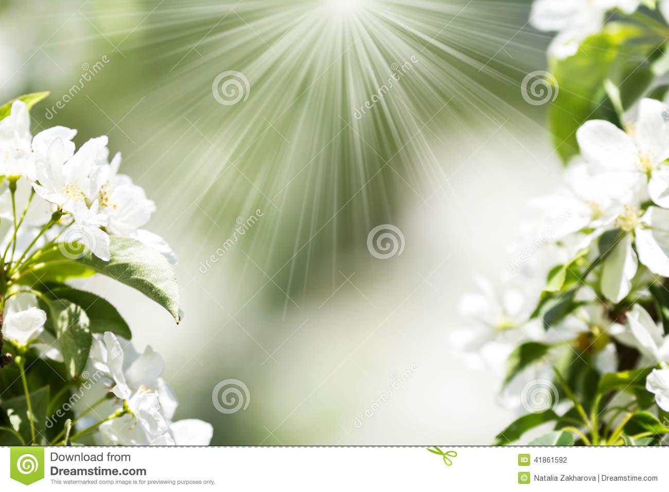 Cherry Blossoms Over Blurred Nature Background Spring