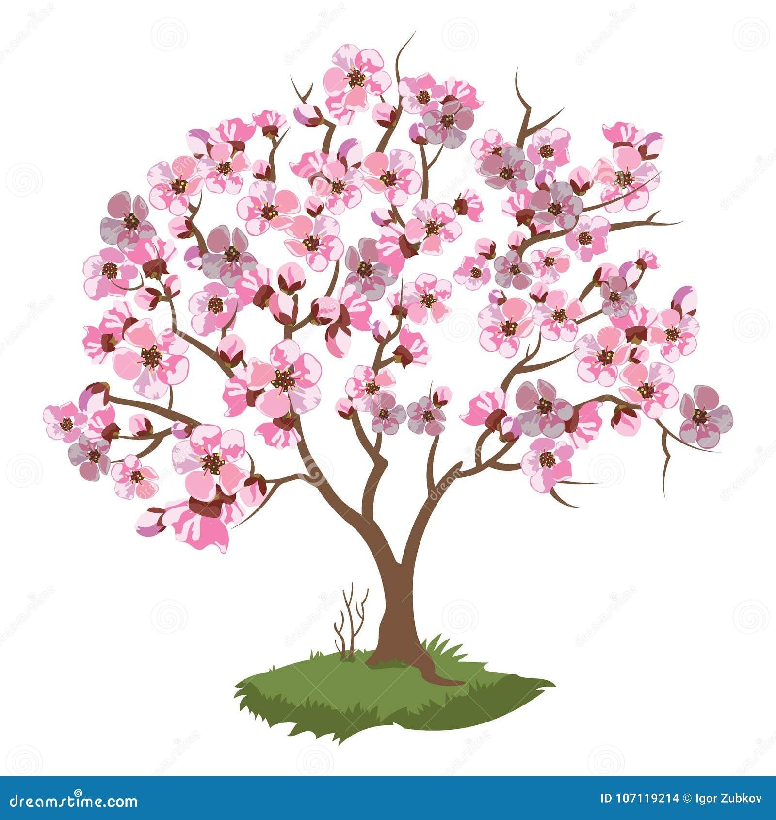 Cherry Blossoms. Spring Illustration Of A Flowering Sakura ...
