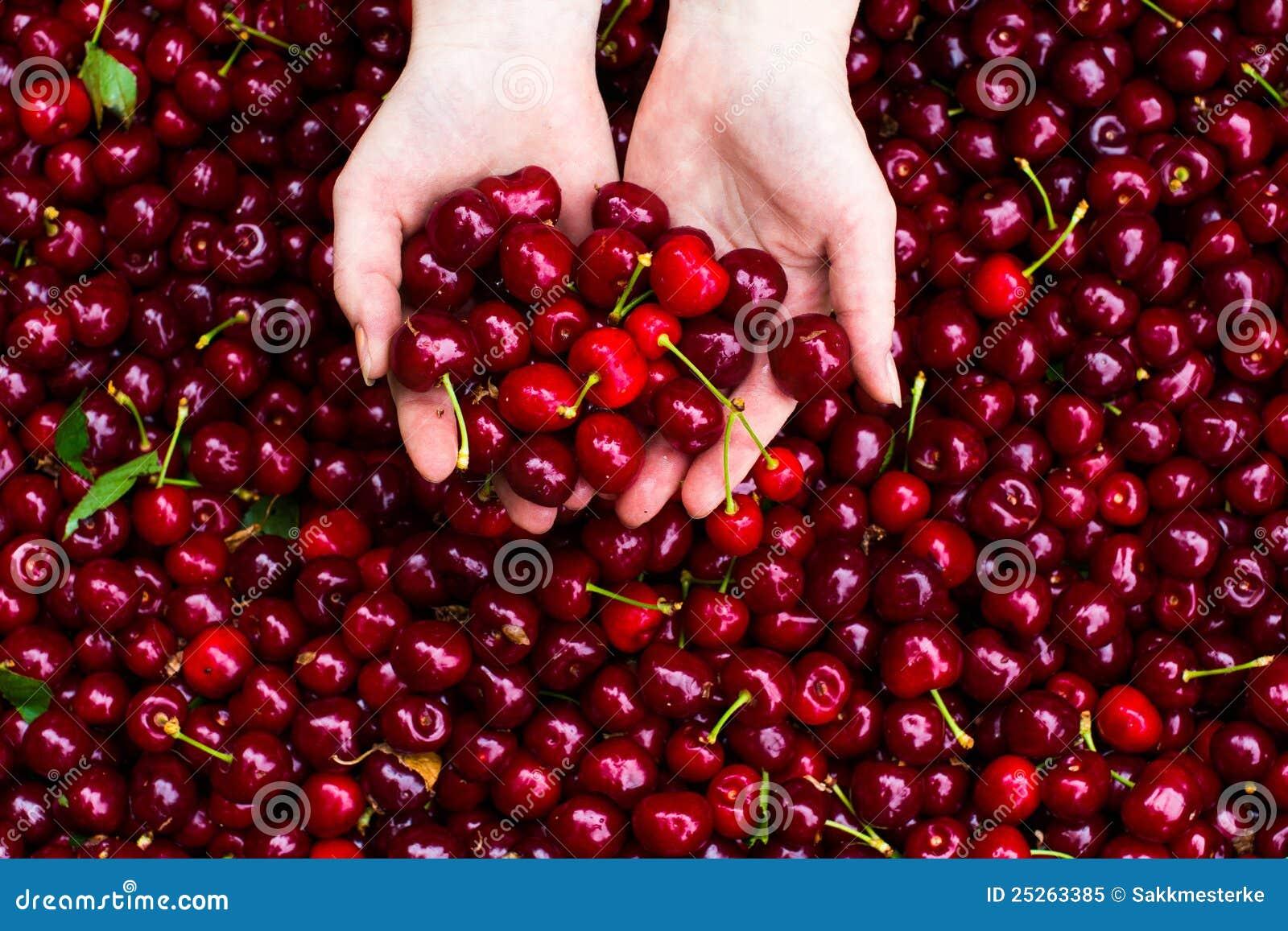 Cherry in hands