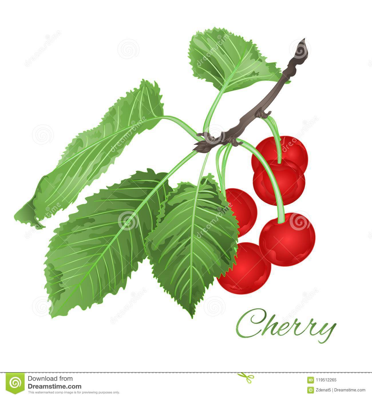 cherry leaves and berries and blossoms fruit healthy eating vintage
