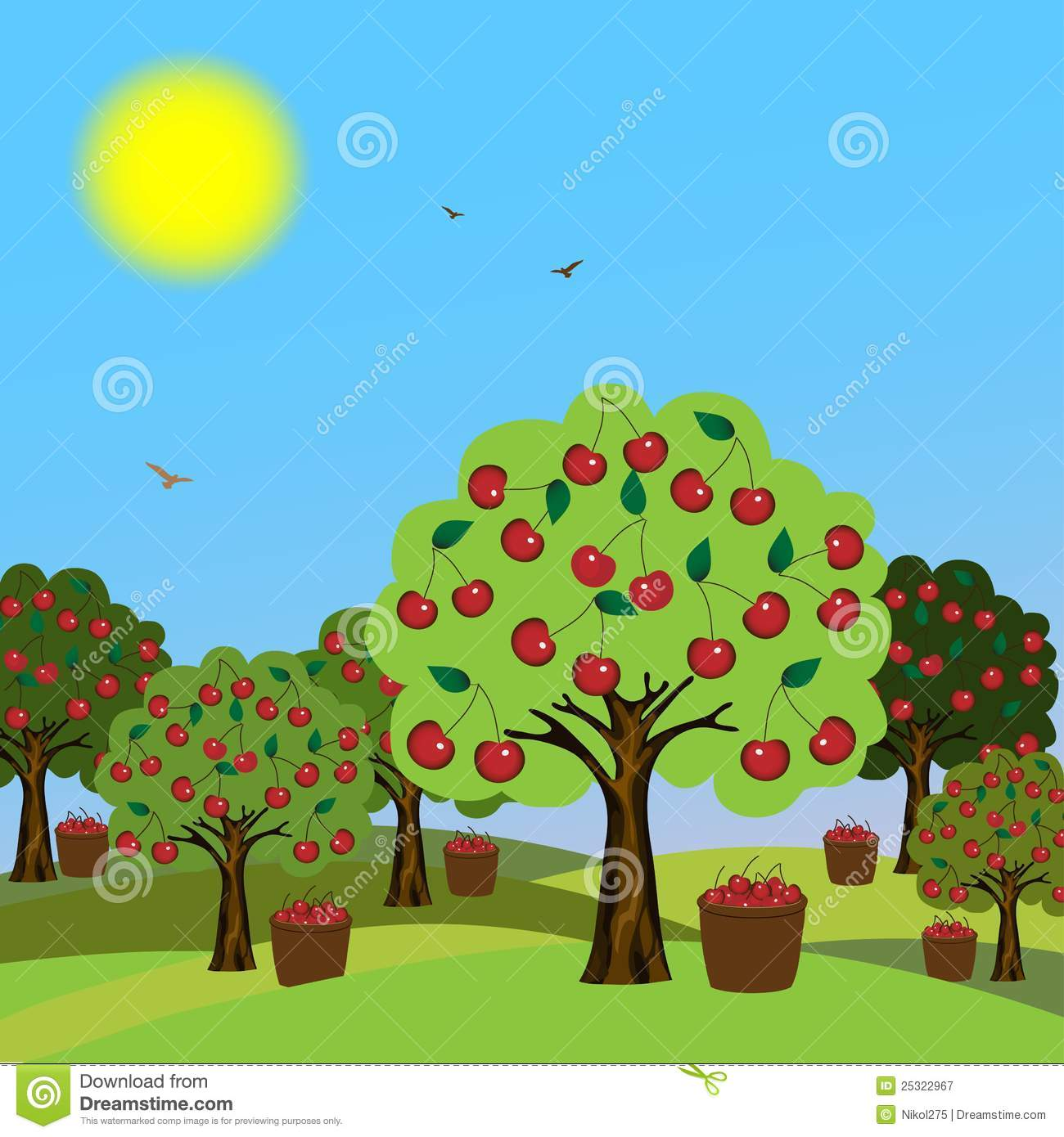 Cherry orchard stock vector. Image of icon, cherry, leaf ...
