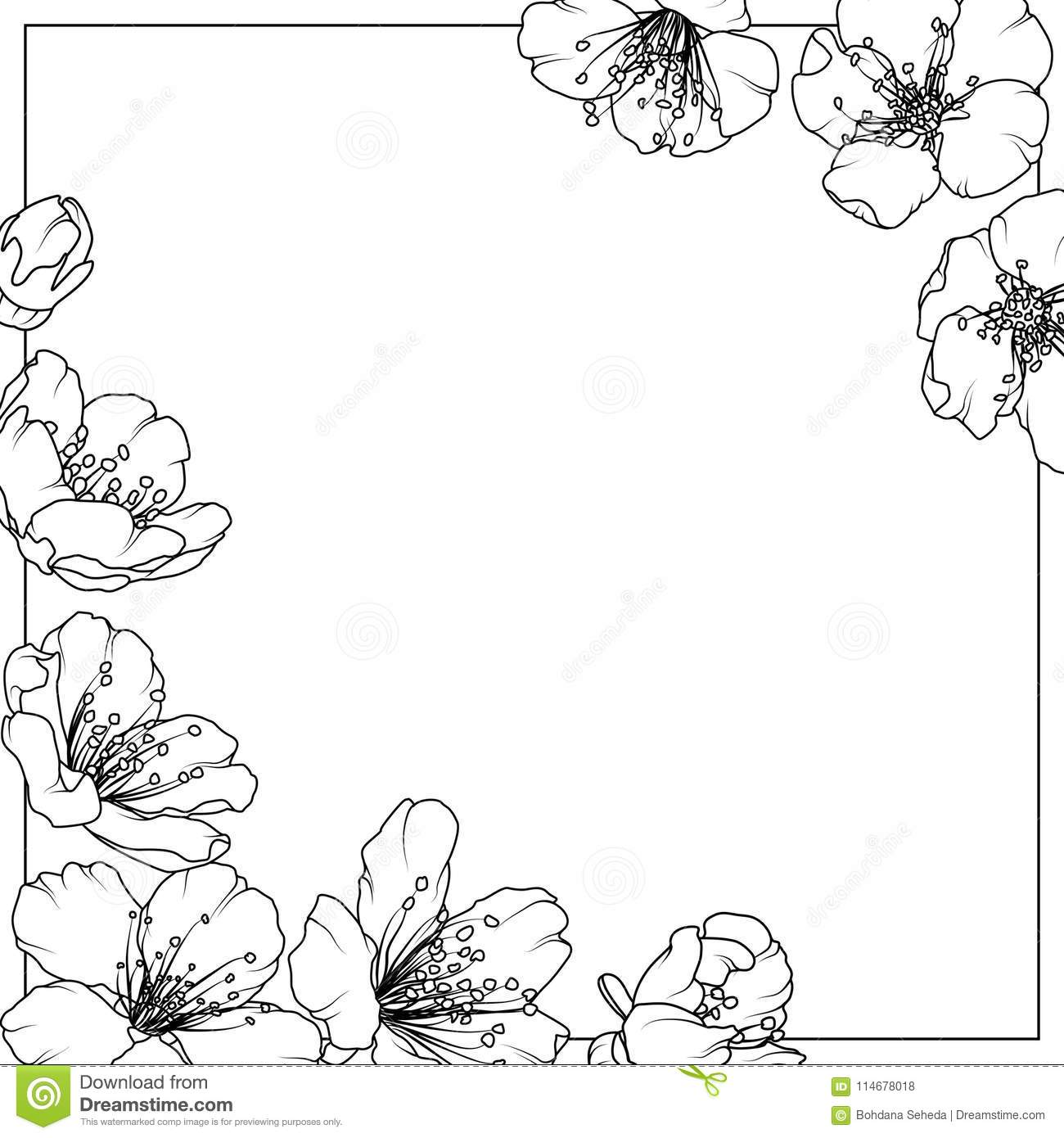 cherry sakura aliche tree spring flowers frame stock vector