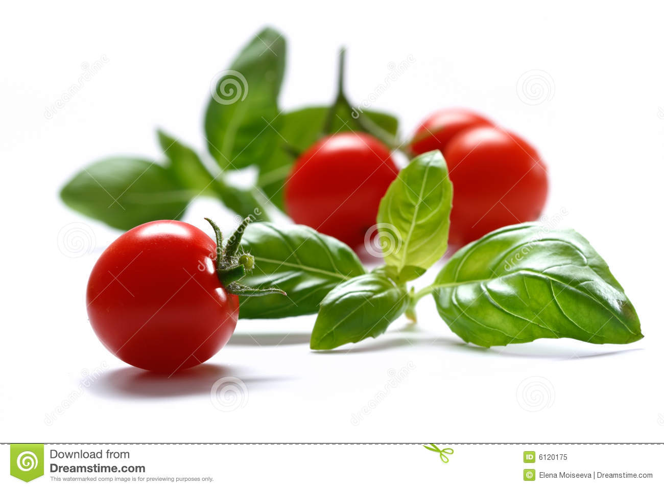 Cherry tomato with basil herb on white background