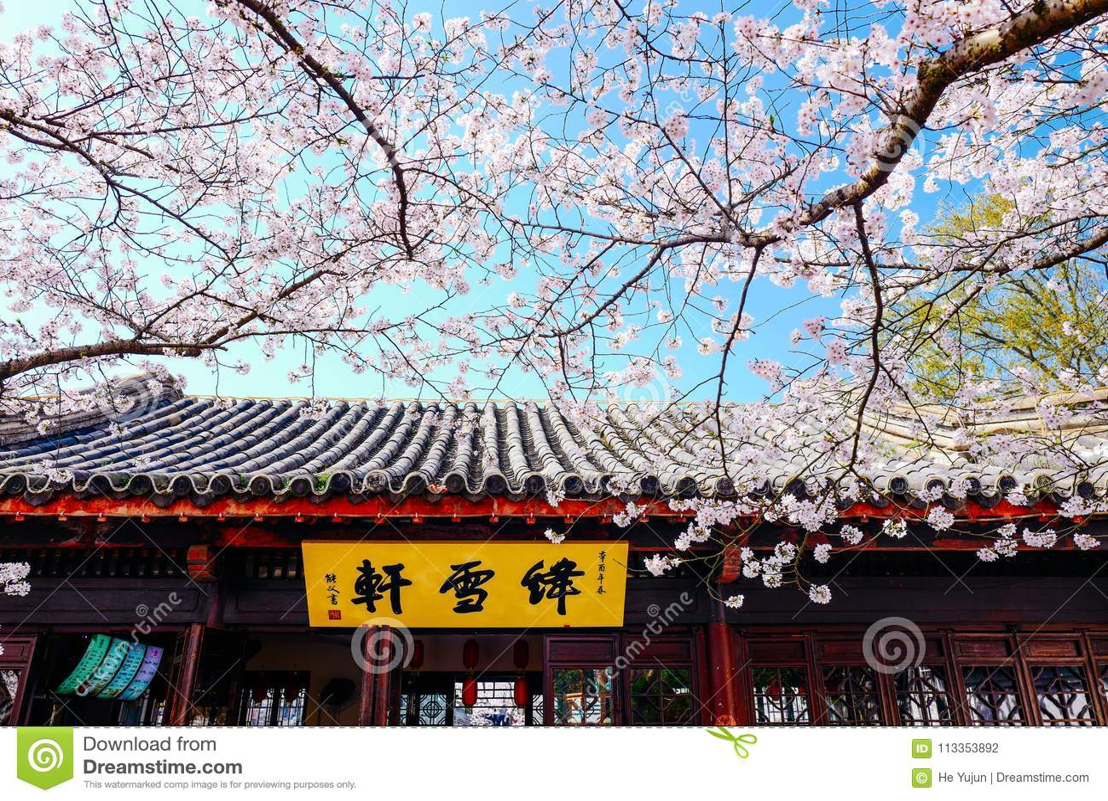 Cherry Blossom valley,wuxi,china