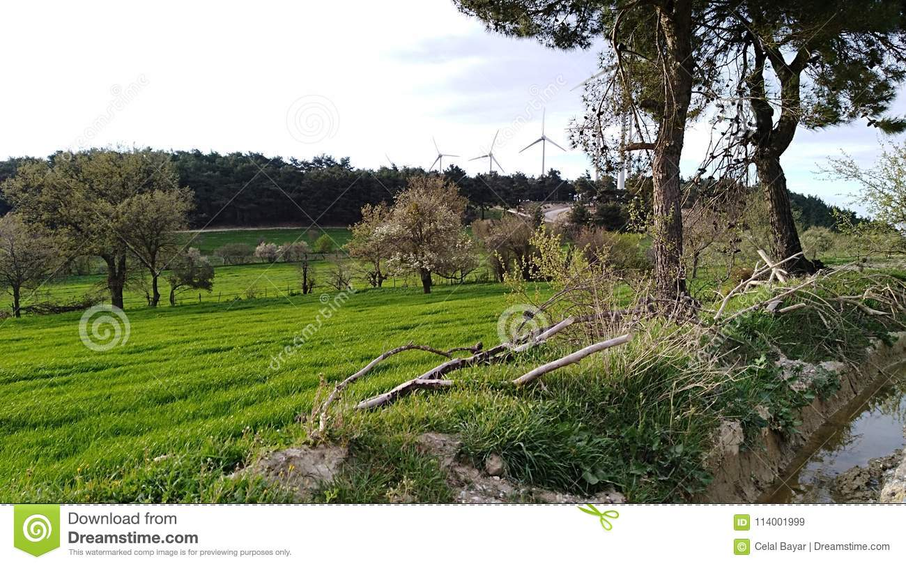 Download Planted fields are green stock image. Image of creek - 114001999