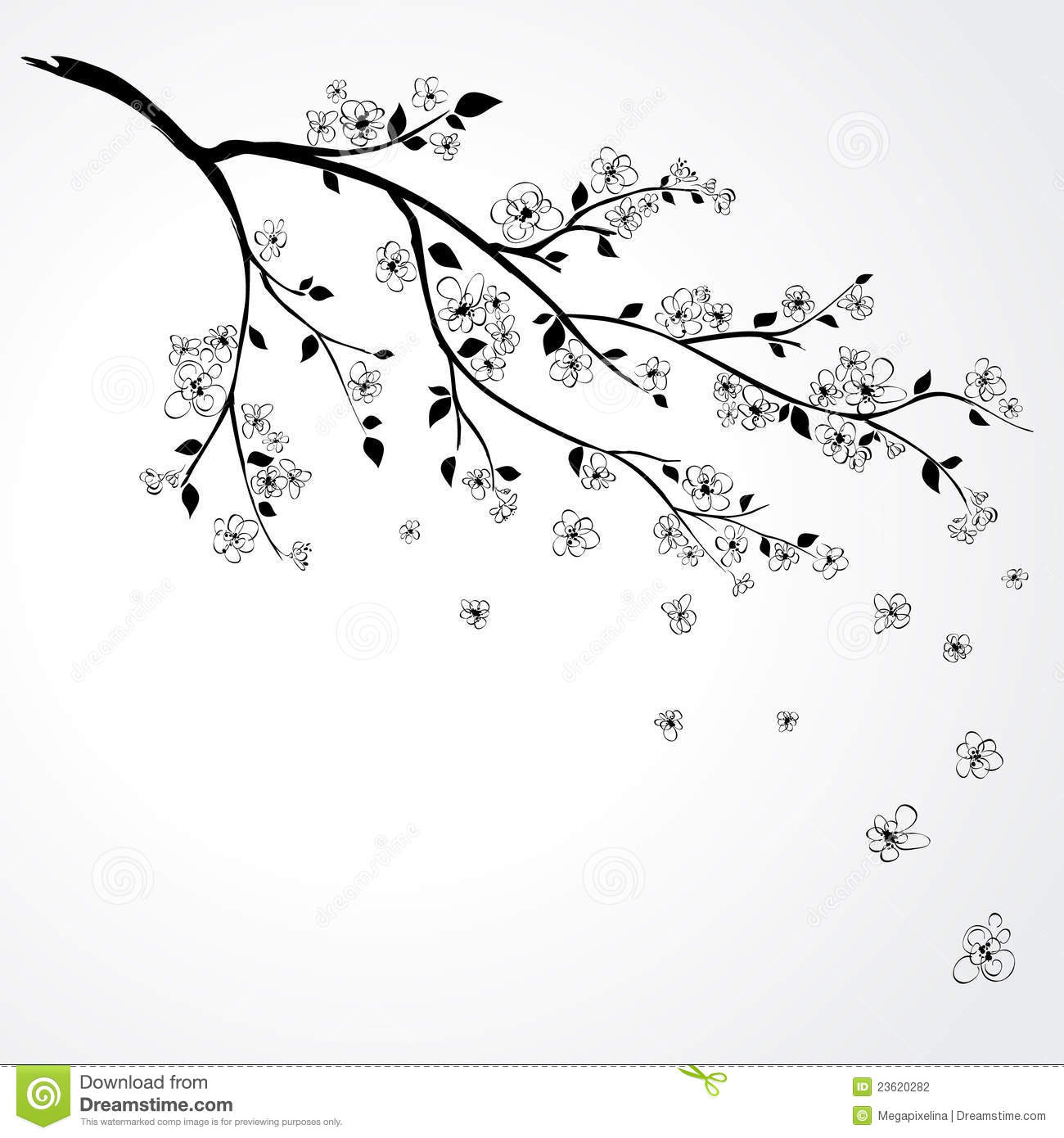 Vector Illustration Of Branch 23620282 Cherry Tree Blossom Stock Photography Image23620282 How To Draw Blossoms