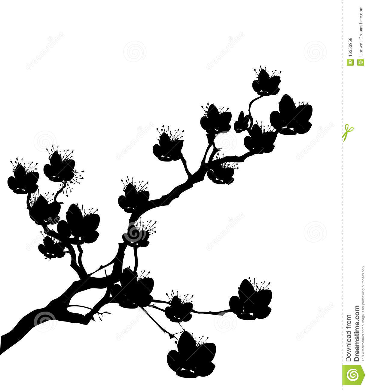 cherry tree flowers stock vector  illustration of drawing