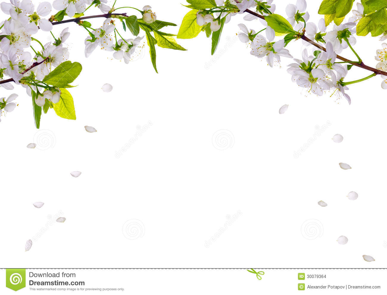 Cherry-tree Flowers Half Frame And Falling Petals Stock Images - Image ...