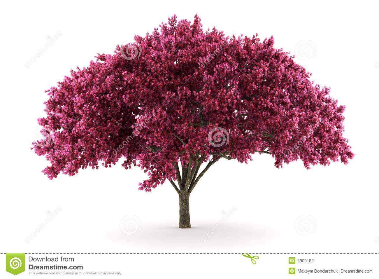 cherry tree black single women What's that tree worth (hopefully) you were paid $2096 for that single tree black cherry is a relatively fast growing species.