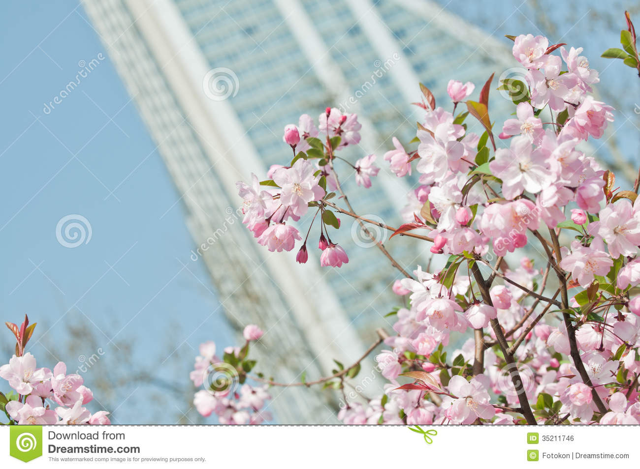 Cherry tree royalty free stock image image 35211746 for Pink small tree