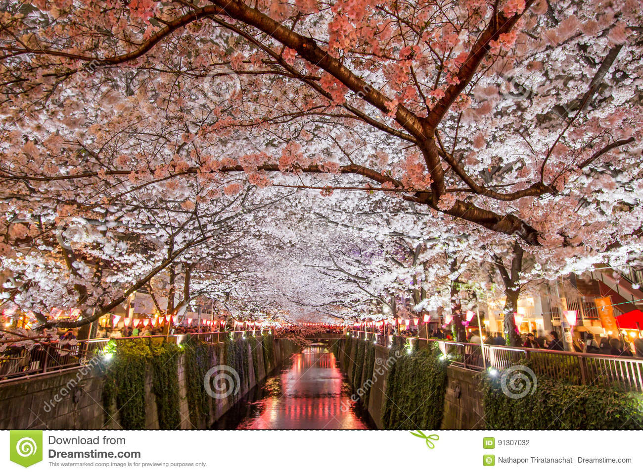 Cherry trees along Meguro River,Meguro-ku,Tokyo,Japan are light up in the evenings of spring.