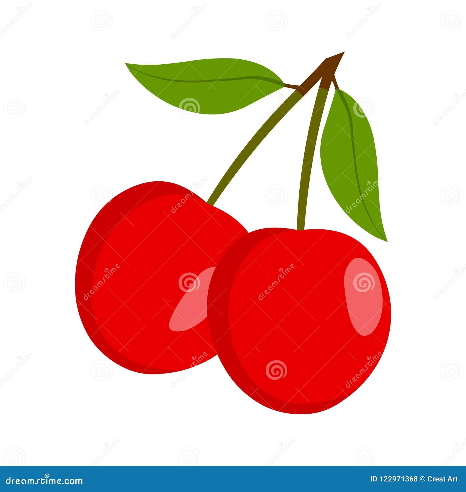 Cherry vector.Fresh cherry illustration