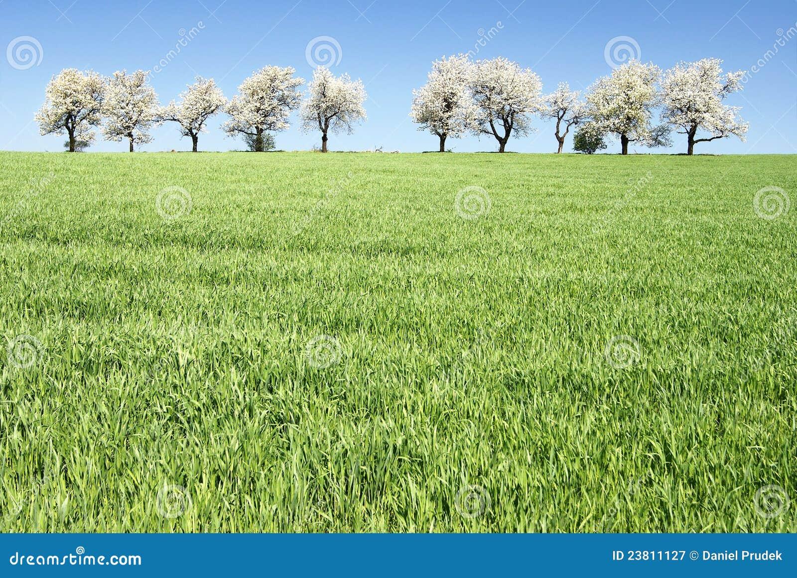 Cherryet fields trees