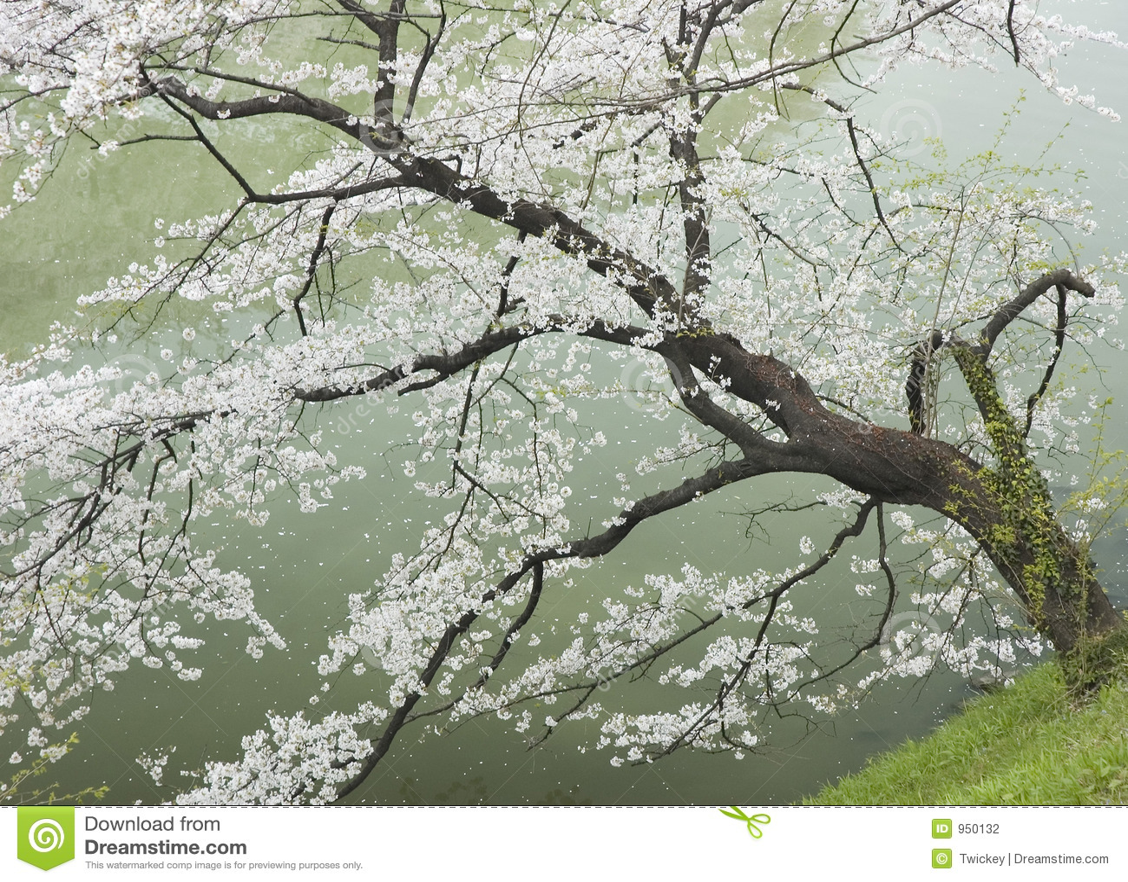 Cherryflodtree