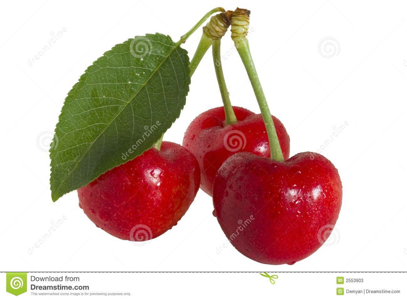 Cherrys and leaf