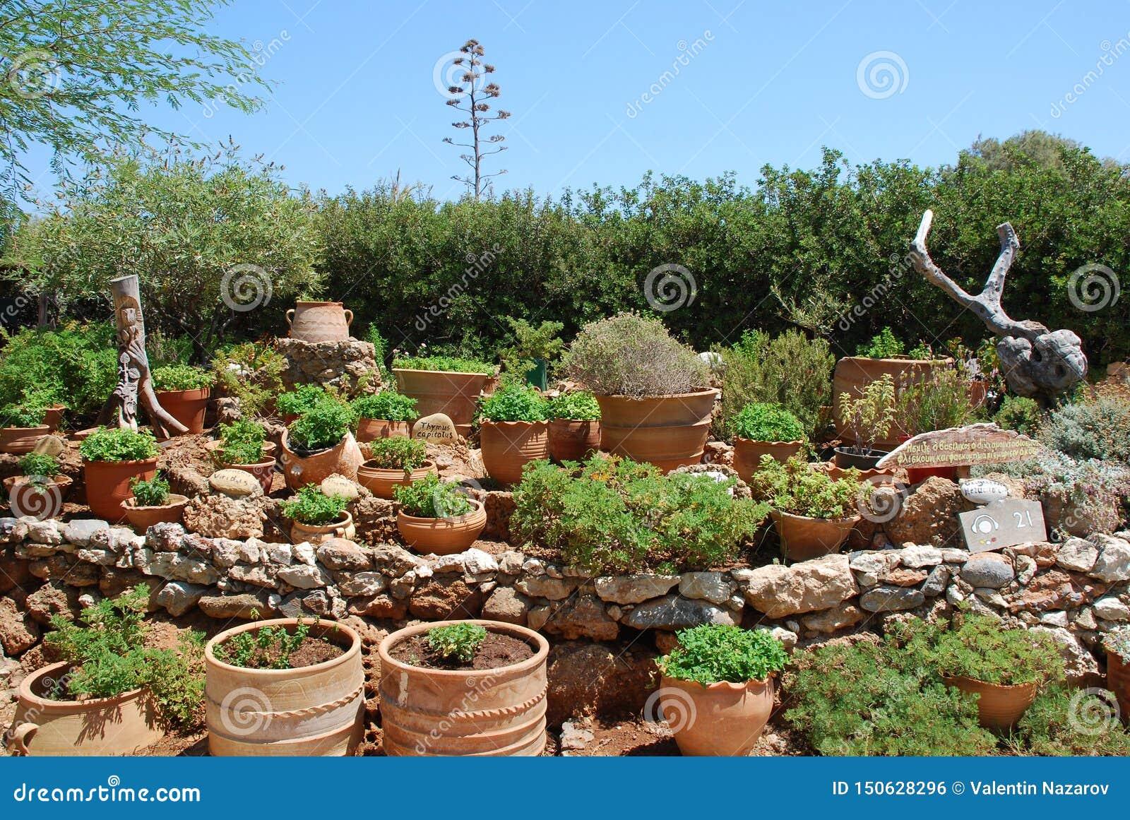 Chersonissos, Cyprus, Griekenland - 31 07 2013: Tuin van installaties en bloemen die in kleipotten groeien