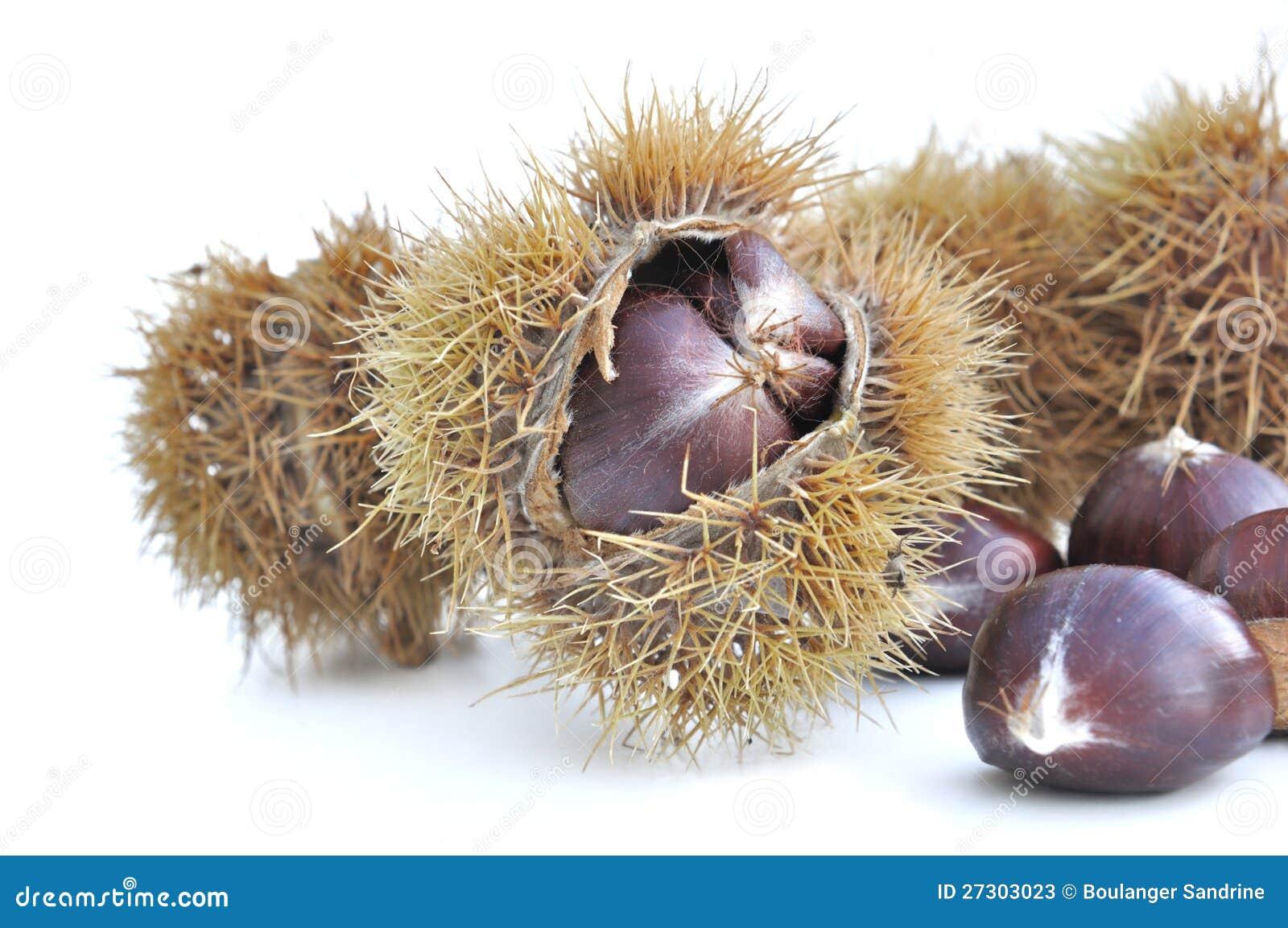 Chesnuts i husk