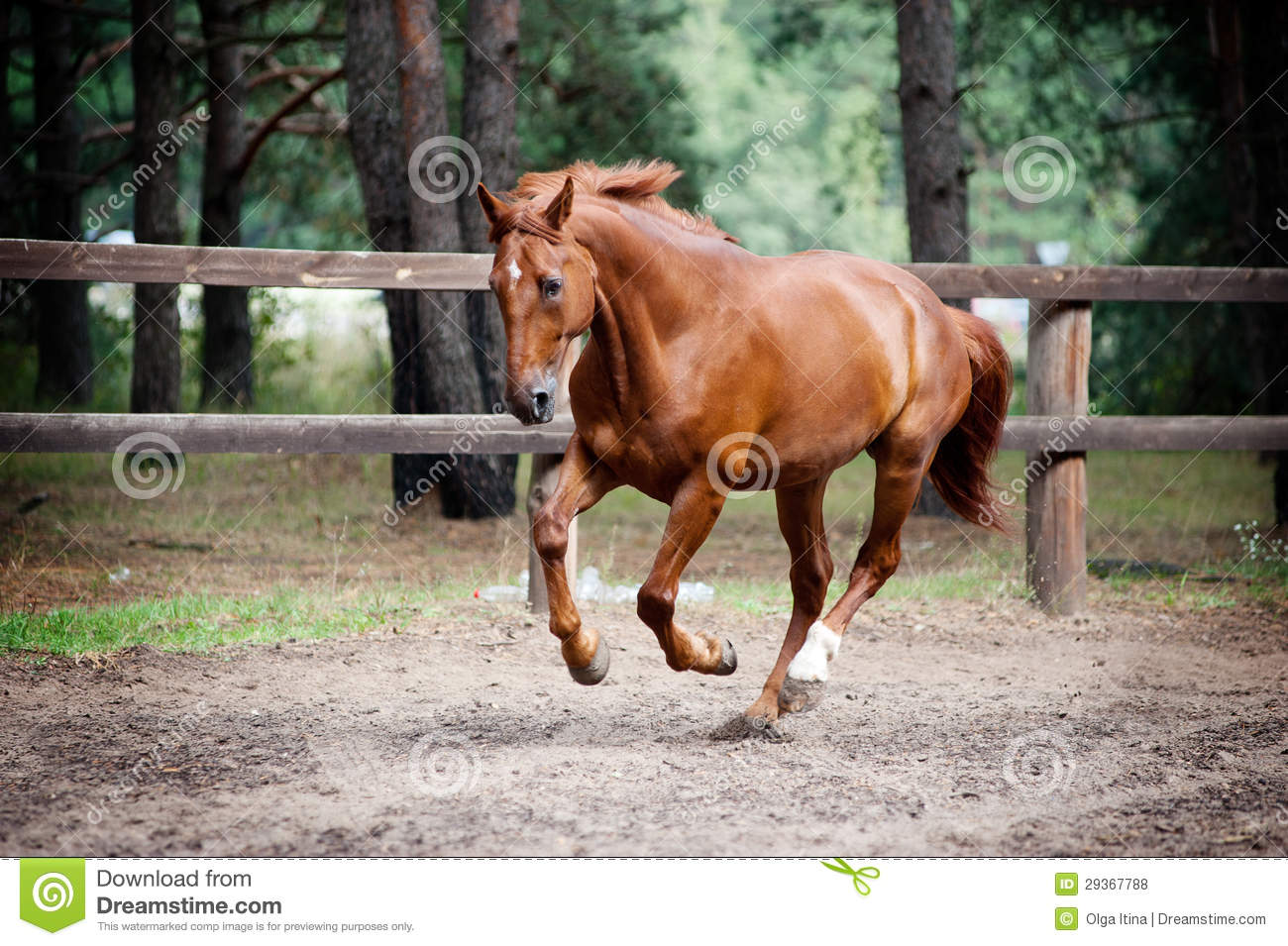 Chestnut horse in action