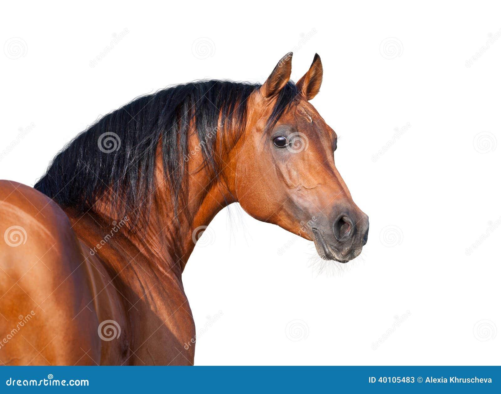Chestnut horse head isolated on white background.
