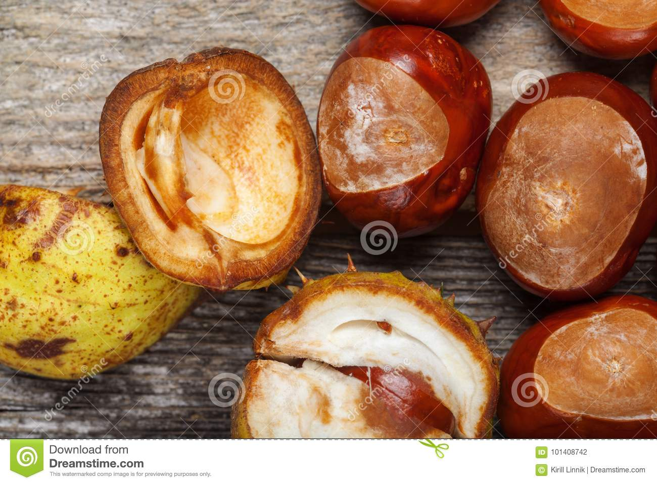 Download Chestnut on the table stock photo. Image of retro, copy - 101408742