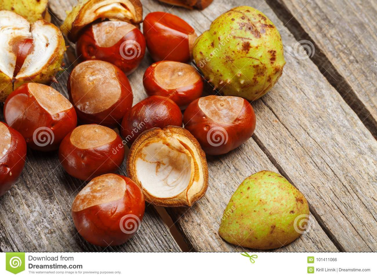 Download Chestnut on the table stock photo. Image of forest, nobody - 101411066
