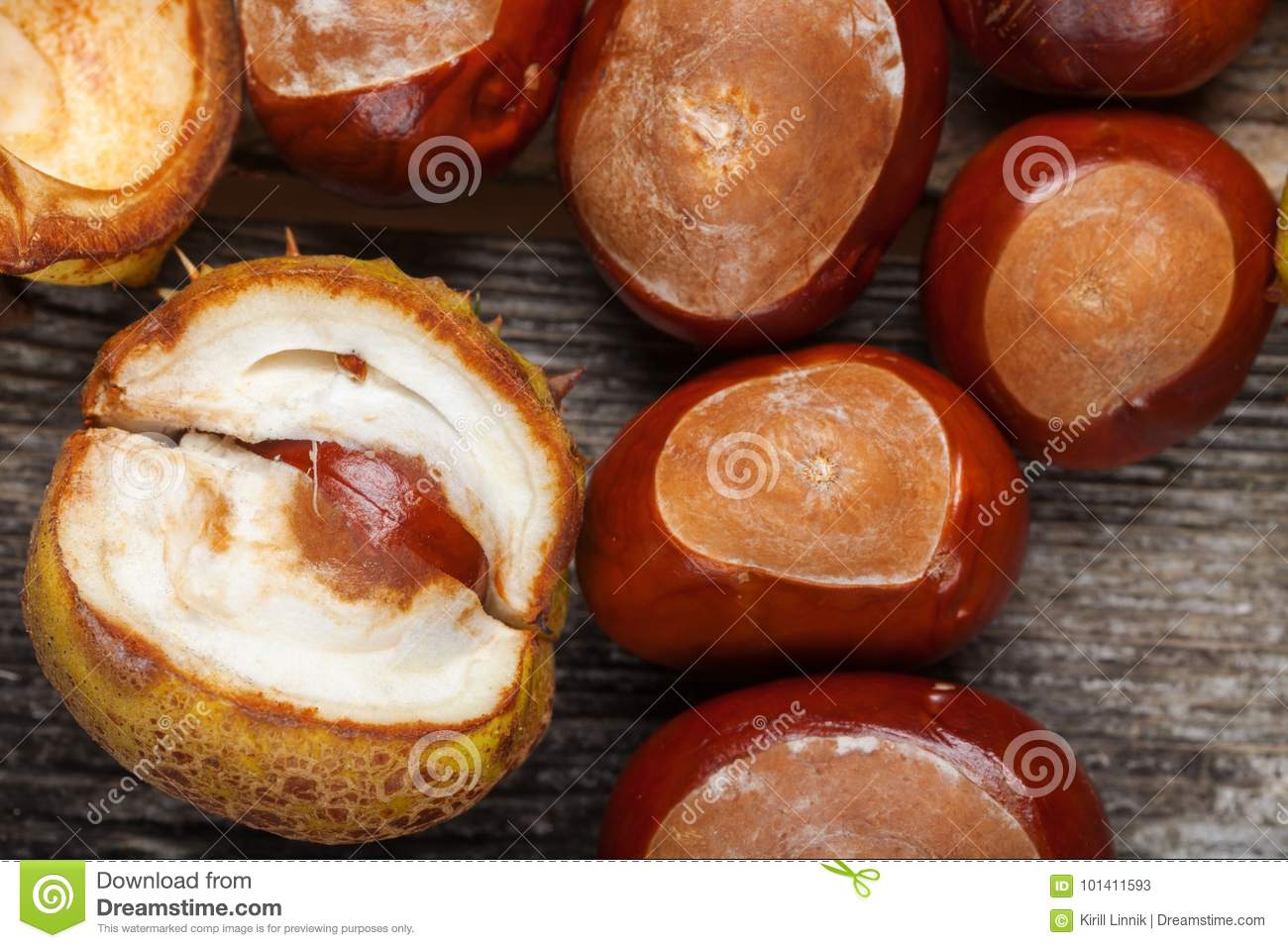 Download Chestnut on the table stock image. Image of copy, fall - 101411593
